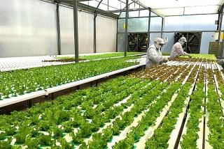 Thúc đẩy sản xuất nông nghiệp trong điều kiện dịch bệnh Covid-19