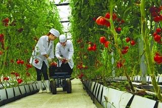 Hơn 17.000 khách hàng vay vốn sản xuất nông nghiệp công nghệ cao, nông nghiệp sạch