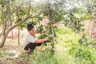 Hà Nội: Gần 65.000 lượt hộ được vay vốn ưu đãi trong 6 tháng đầu năm 2021