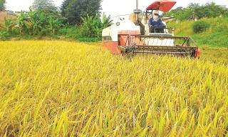 Năm 2021: Nông nghiệp sẽ tiếp tục là trụ đỡ của nền kinh tế