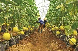 Đồng hành cùng nông dân thời 4.0
