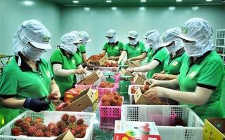 Tăng cường hợp tác nông nghiệp Việt Nam - New Zealand