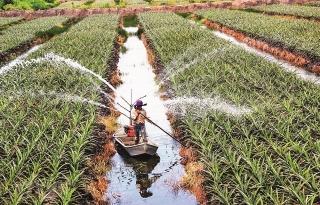 Để xuất khẩu nông nghiệp phát triển bền vững