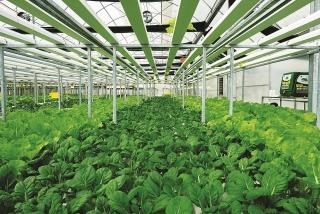 TP.Hồ Chí Minh phát triển vùng nguyên liệu nông sản
