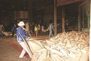 Doanh nghiệp, nông hộ trồng cà phê đang gặp khó