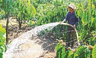 Nắng hạn gây thiệt hại nặng cho nông nghiệp