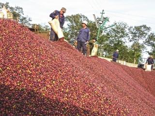 Xuất khẩu cà phê khó đạt mục tiêu