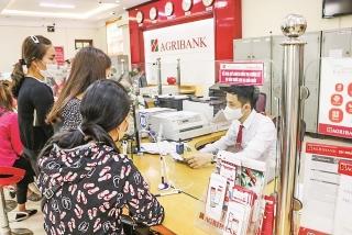 Agribank Lục Ngạn: Đảm bảo đủ vốn cho doanh nghiệp và người dân