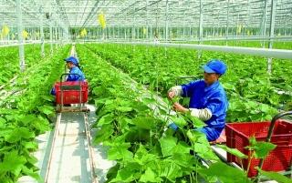 Đẩy mạnh phát triển nông nghiệp công nghệ cao
