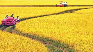 Nâng sức cạnh tranh cho nông sản Việt