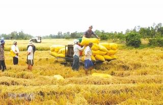 Agribank: Khẳng định vai trò và vị thế trong phát triển tam nông