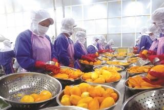 Thúc đẩy các hợp tác xã xuất khẩu trái cây