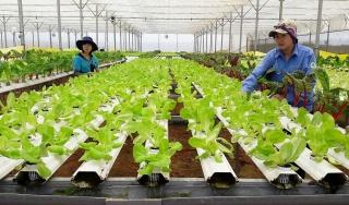 TP.HCM: Giá trị sản xuất nông nghiệp 11 tháng ước tăng 2,62% so với cùng kỳ