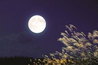 Chạm cốc với trăng sao