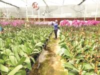 Agribank chung sức thúc đẩy nền nông nghiệp hiện đại