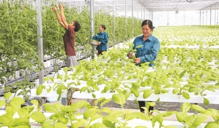 Đẩy mạnh ứng dụng khoa học trong nông nghiệp