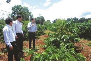 Hàng nông sản vẫn đối mặt với nhiều thách thức