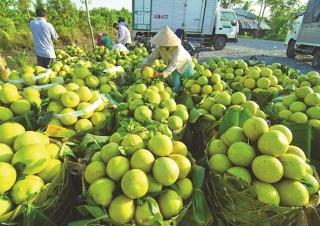 Agribank tô điểm bức tranh nông nghiệp Việt Nam