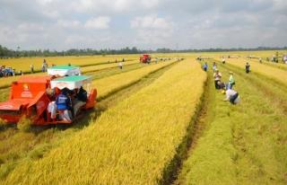 Đề xuất tiếp tục miễn thuế sử dụng đất nông nghiệp đến ngày 31/12/2025