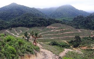 Xử lý nghiêm các trường hợp vi phạm đất đai, trật tự xây dựng tại Phú Quốc