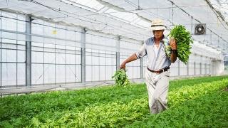 Nông nghiệp thực phẩm Việt Nam vững vàng vượt qua đại dịch