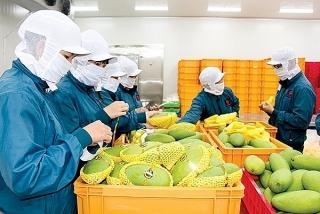 Đưa hoa quả Việt Nam vào thị trường Thượng Hải